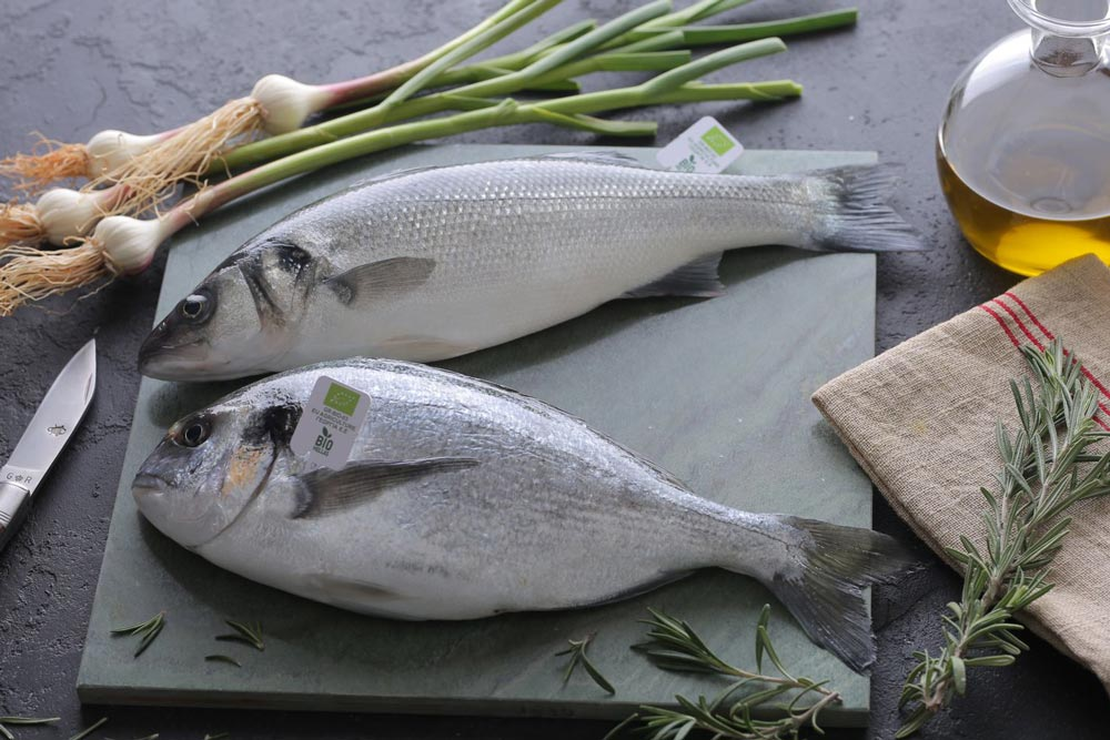 Kefalonia Fisheries - Organic Sea bass & Sea bream - Premium Quality for healthy Mediterranean diet.